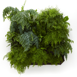Woolly Pockets Recycled Planters